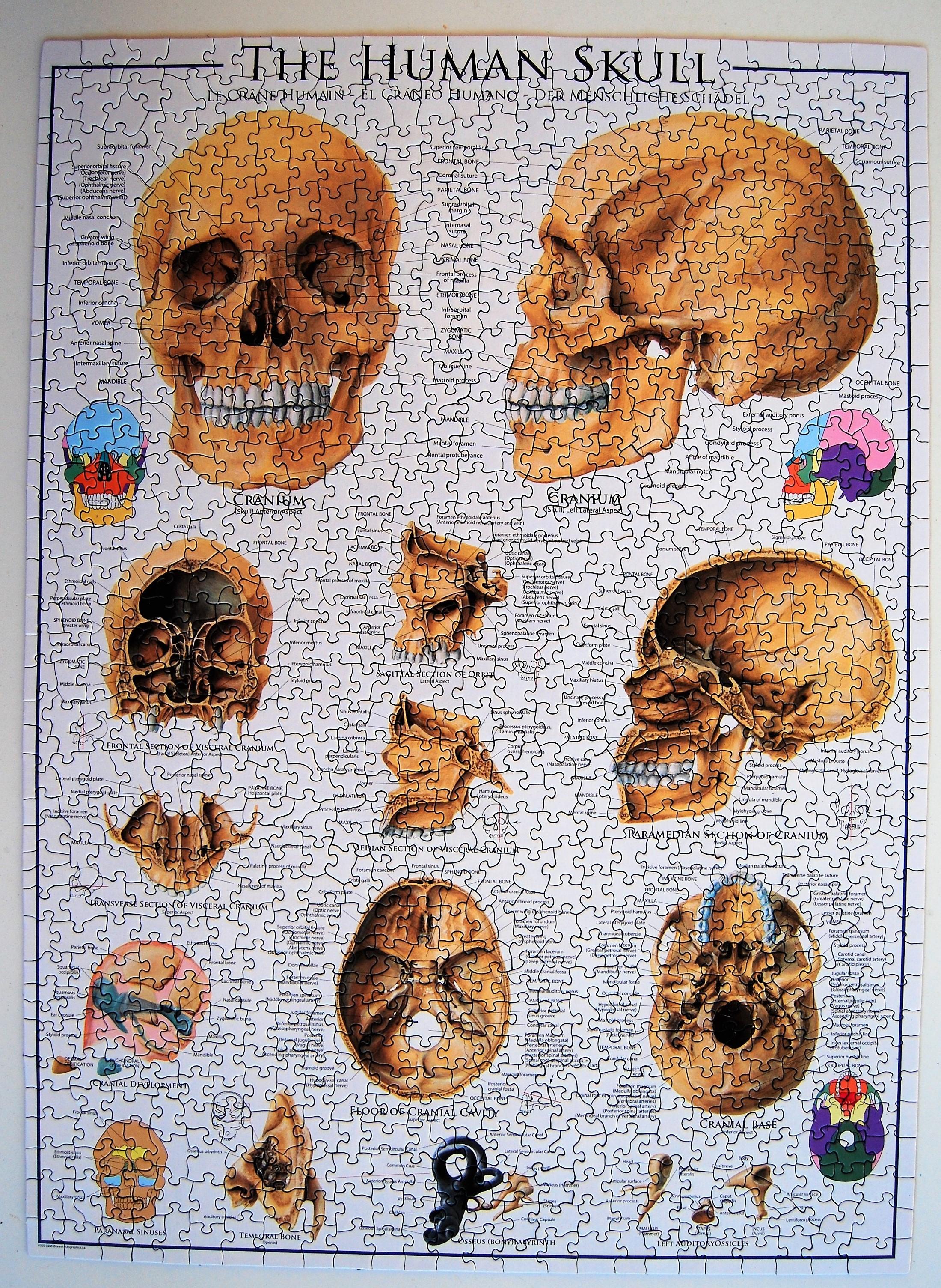 1000 – El cráneo humano (Eurographics,, ??) |